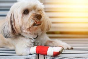 AdobeStock_125020474_Hundekrankenversicherung