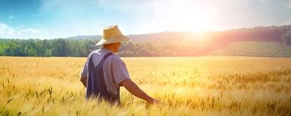 Bauer in Weizenfeld in der Sonne