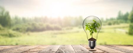 Pflanzentrieb in Glühbirne auf Holzveranda mit Blick in die Natur