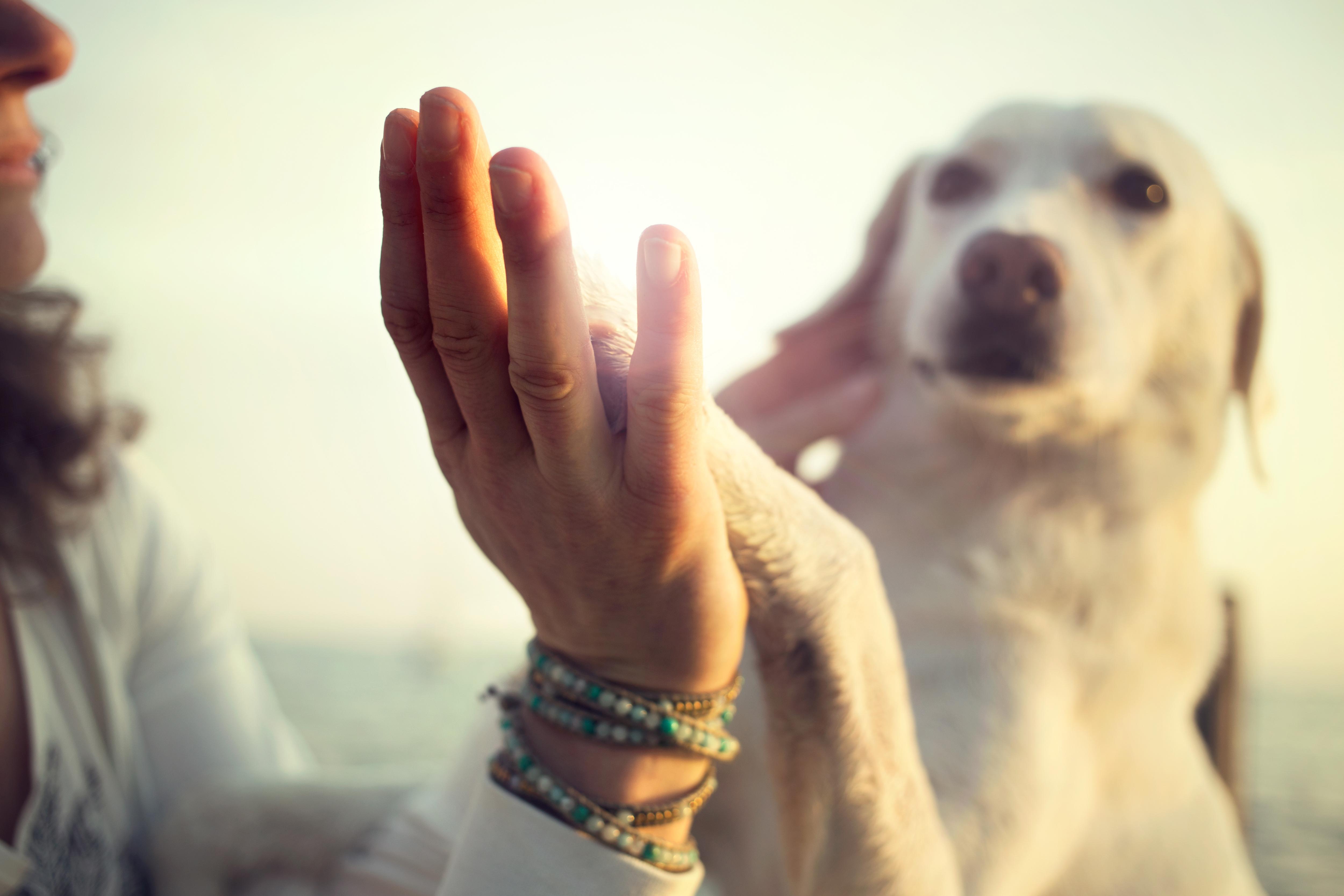 Hundebetreueung