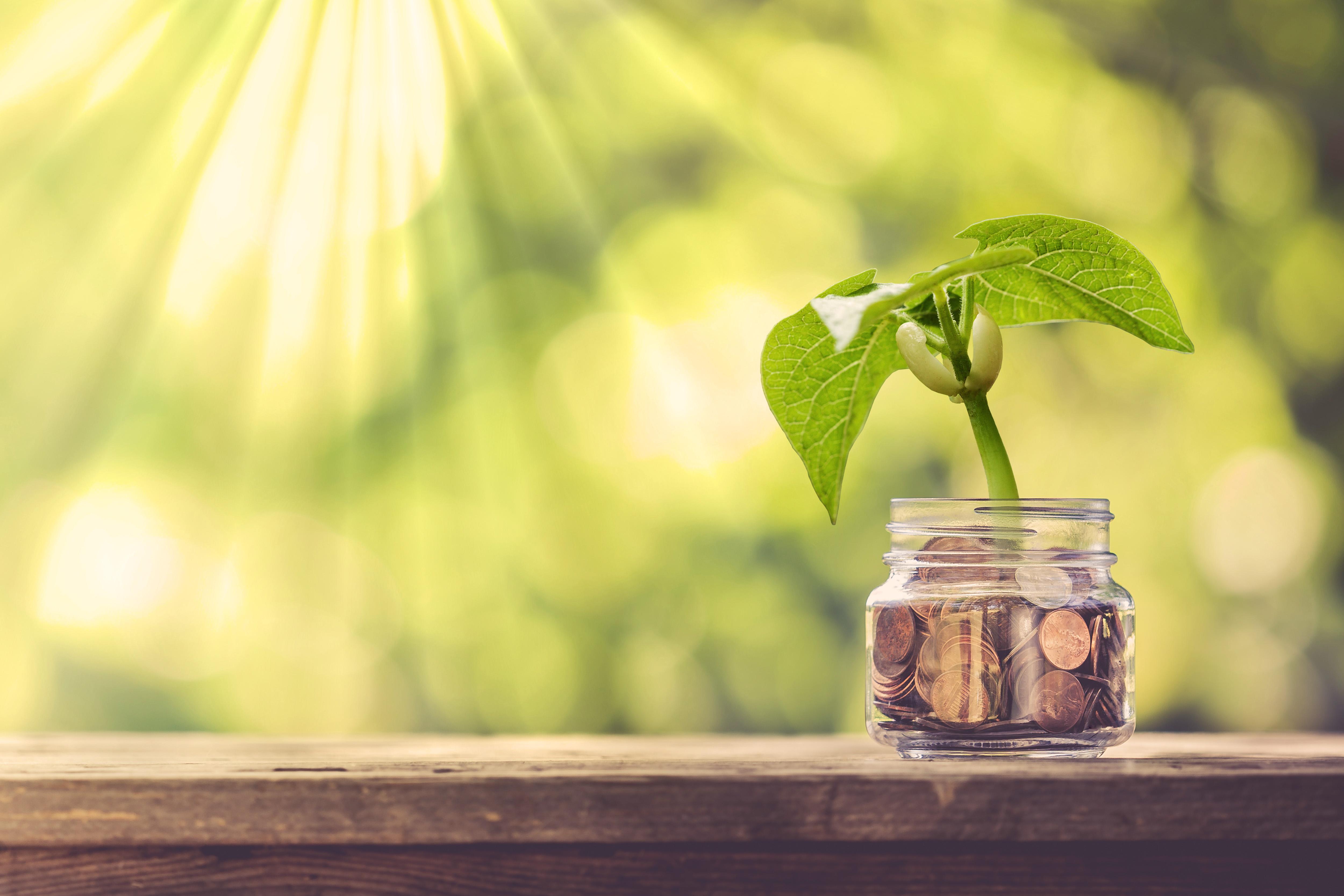 Pflanze wächst auf Geld Pflegegeld