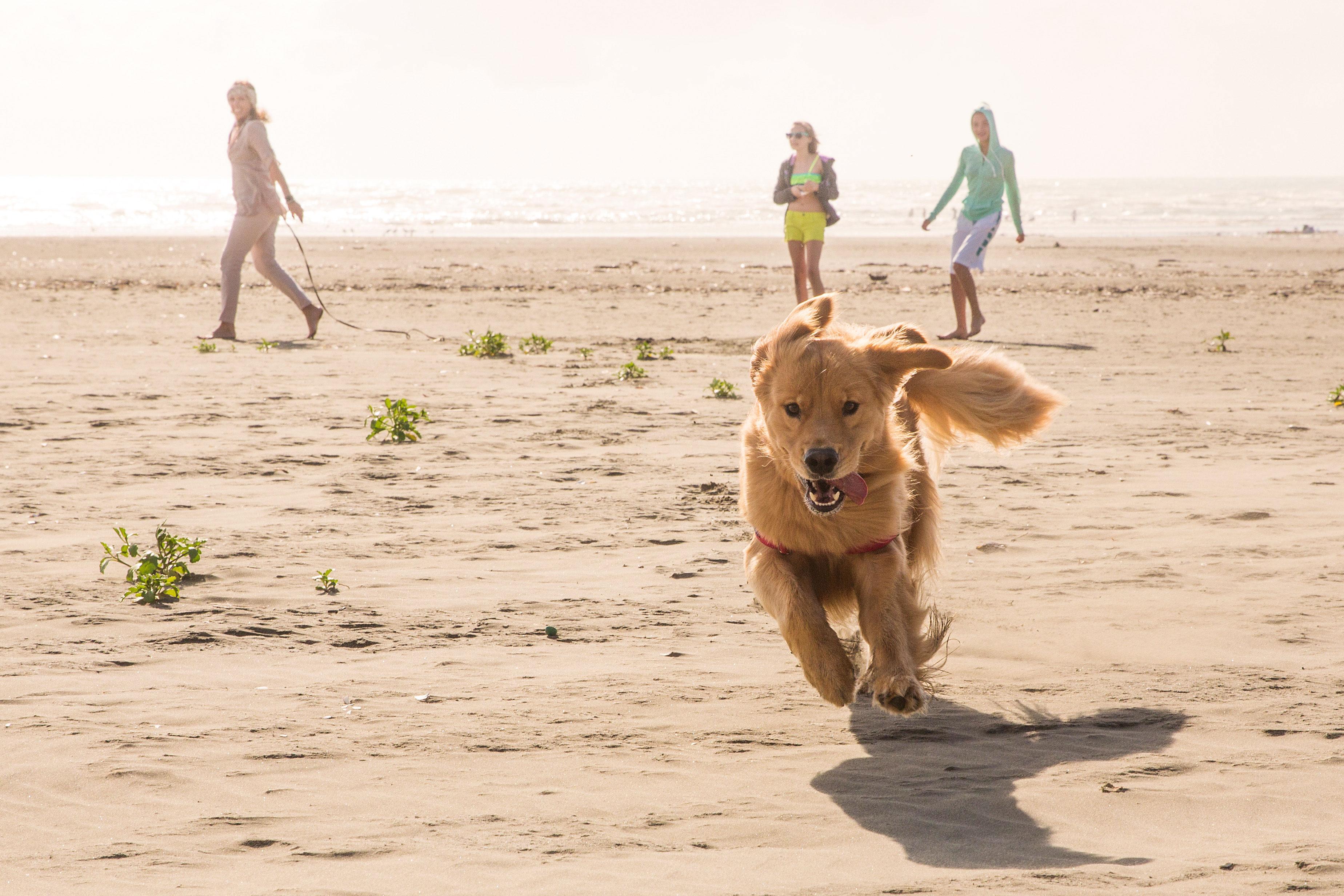 Hund rennt den fast menschenleeren Strand entlang