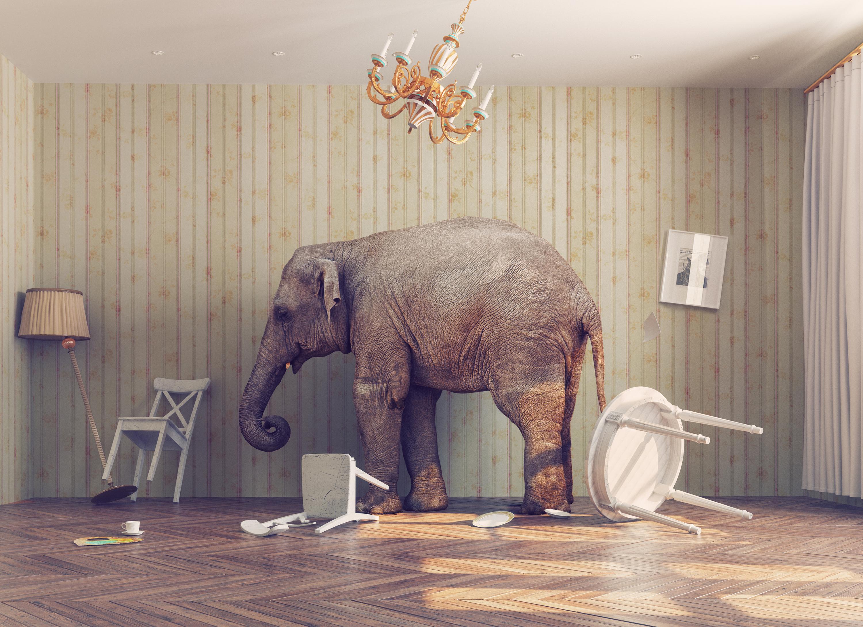 Ein Elefant in einem kargen Wohnzimmer