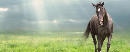 Pferd läuft über die Wiese