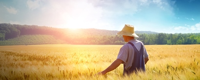 Bauer wandert durch ein Weizenfeld